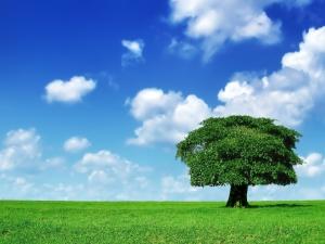 ilustrasi Pohon Rasa